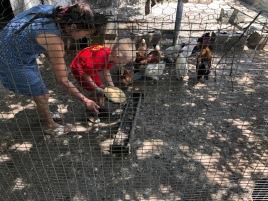 Kippen voeren met La Mama Anna